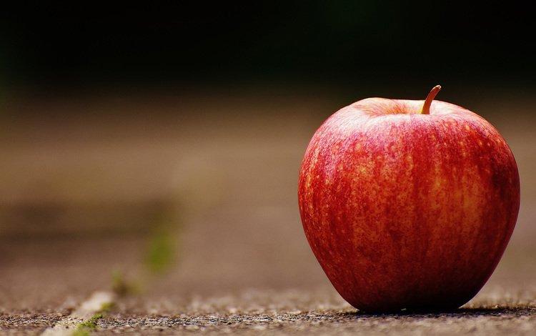 食品のエネルギー密度について考える